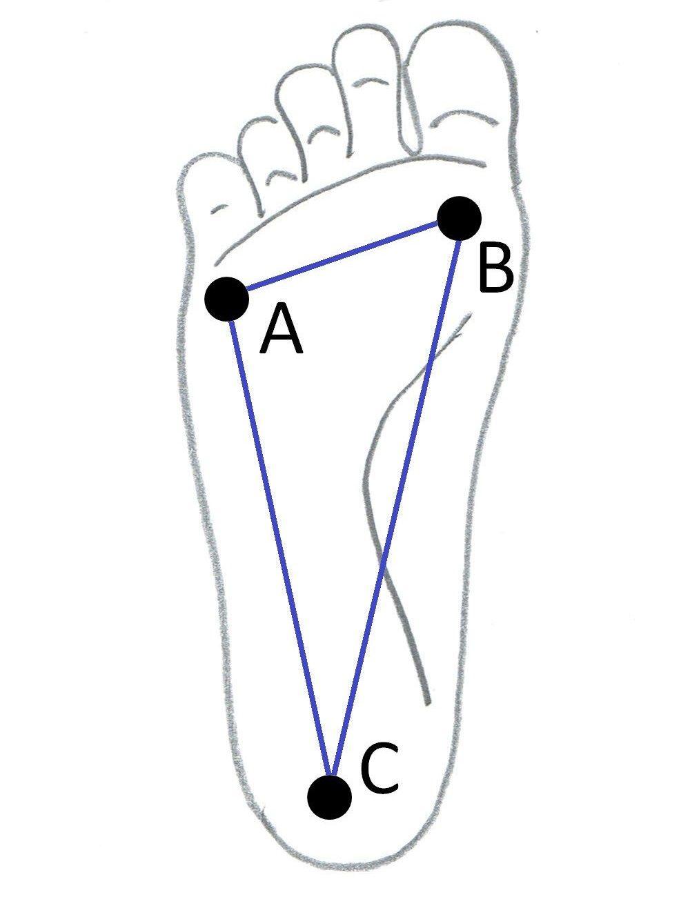 足底アーチ説明図
